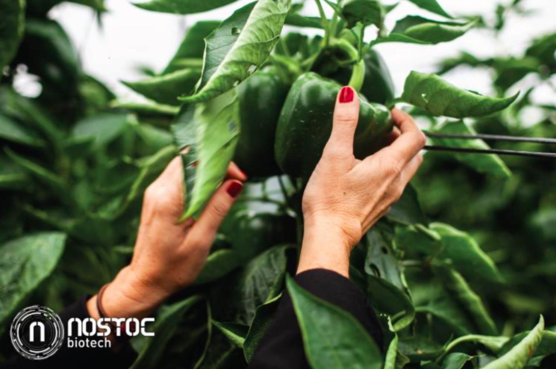 Nostoc Biotech cierra una ronda de 1,5 millones de euros liderada por el Fondo Bolsa Social