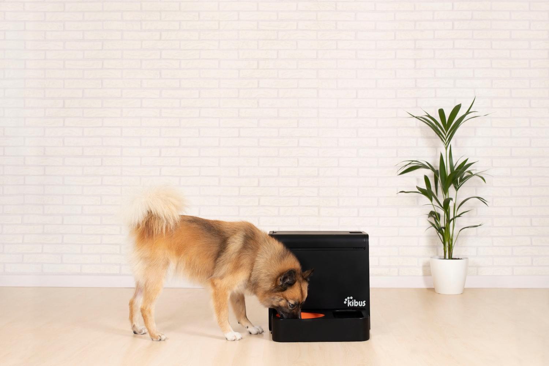 Ronda de Kibus tras lanzar dispositivo de comida para perros