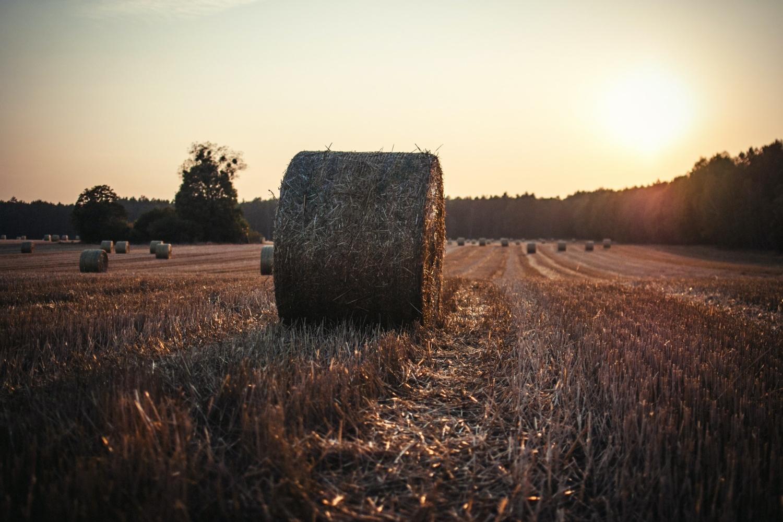 Proyecto Kulto, plataforma que conecta a agricultores y usuarios de proximidad e impulsa el consumo sostenible