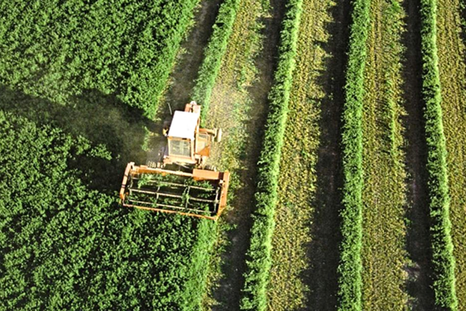 Agrotech, agricultura.
