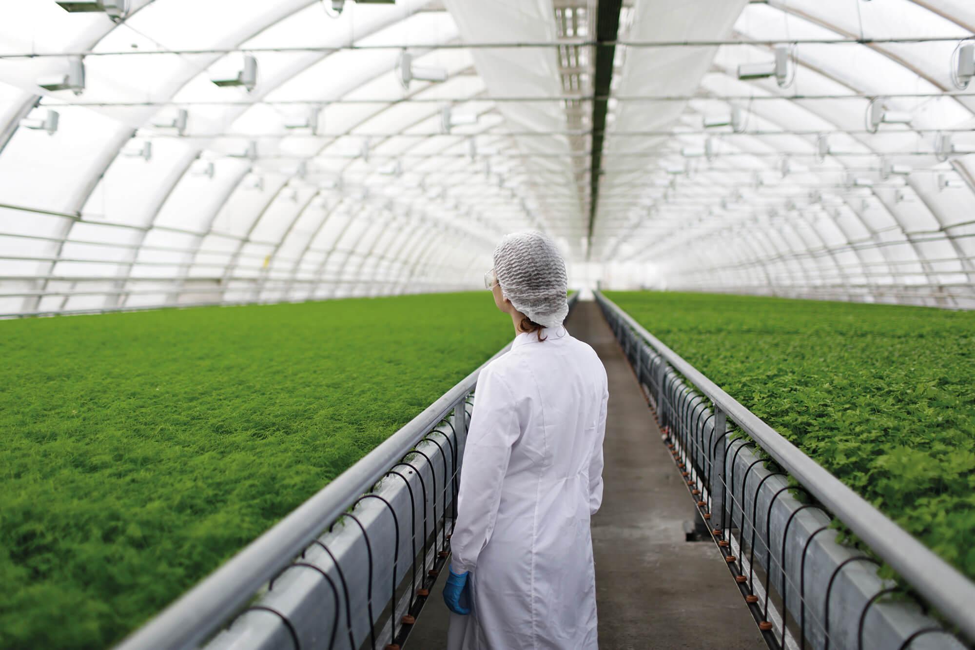 CAPSA VIDA se une a la Bolsa Social para financiar empresas que promuevan una alimentación más sostenible